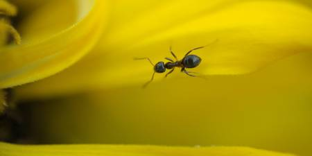 Ant on yellow road.