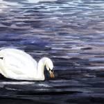 """""""Swan"""" by PaulGardner"""