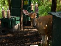 Deer Treatment Center