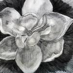"""Magnolia"" by ARTistic_Anne"