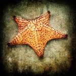 """Starfish"" by carlosRestrepo"