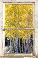 Colorado Gold Rustic Window View