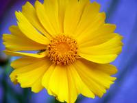 Happy Yellow Flower