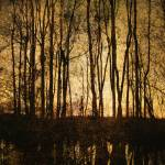 """""""Bare Trees 1"""" by SkipNall"""
