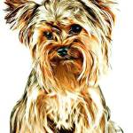 """Yorkshire Terrier"" by DennyPhil"