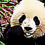 """""""Panda"""" by DennyPhil"""