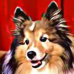 """""""Sheltie Dog"""" by DennyPhil"""
