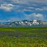 """Field of Wildflowers"" by boppintheblues"