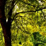 """Autumn Forest"" by raetucker"