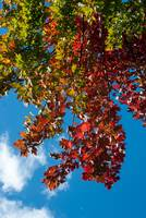 Image ID# Whalen-101013-5012 - Fall Colors Two.jpg