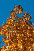Image ID# Whalen-101013-5013 - Fall Colors Three.j
