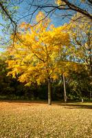 Image ID# Whalen-101014-5021 - Fall Colors Six.jpg