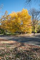 Image ID# Whalen-101014-5025 - Fall Colors 10.jpg