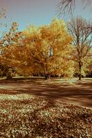 Image ID# Whalen-101014-5026 - Fall Colors 11.jpg