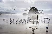 gulls at cannon beach