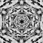 """Noir et Blanc"" by sweetblue"