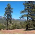 """San Bernardino Forest Vista"" by GlennMcCarthyArtPhoto"