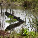 """Magnuson Wetlands"" by patriciaschnepf"