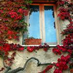 """Red Window"" by Vince-McCall-Photography"