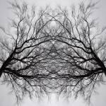 """tree_art_thesecretspirit_print"" by milatovar"