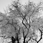 """tree_art_three_print"" by milatovar"