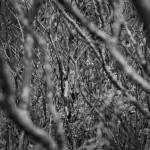 """Autumn Jungle BW"" by WaynePhotoGuy"
