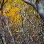 """""""Autumn Jungle"""" by WaynePhotoGuy"""