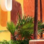 """Palm on Patio"" by JCTPhoto"