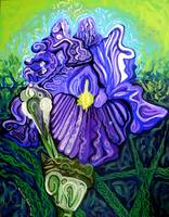 Metaphysical Iris