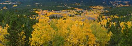 Colorful Colorado Peak to Peak Autumn Scenic View