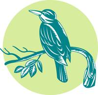 Kingfisher Perching On Branch Woodcut