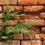 """Ferns in a Brick Wall"" by swazoo"