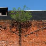 """Tree Growing in Wall"" by swazoo"