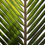 """Pamalāʻau"" by 13thAvenue"