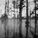 """Foggy Swamp"" by lorrainesphotos"