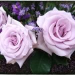 """""""Purple Trio"""" by GiorgettaMcRee"""