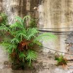 """Ferns and Wires on Wall"" by swazoo"
