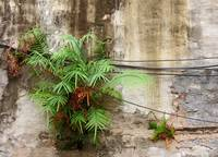 Ferns and Wires on Wall