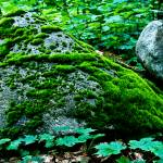 """""""Balancing Moss"""" by CCYPhotography"""