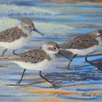"""Sand Pipers"" by Edward_Walsh"