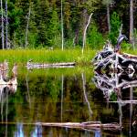"""Glacier National Park 2"" by davidgilbert"
