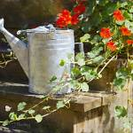 """Watering Can with Nasturtiums"" by JBentley"