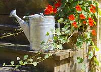 Watering Can with Nasturtiums