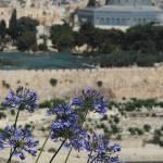 """Jerusalem afar"" by CraigWilson"