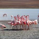 """flamingos group"" by anna_shvartsman"