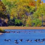 """""""Geese/Ducks"""" by egordo"""