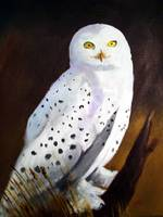 Harfang des Neiges (Snow Owl)
