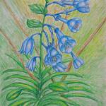"""BlueBell flowers"" by thuraya"
