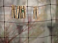 Clothespins on Wire Fence
