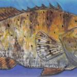 """Grouper"" by Edward_Walsh"